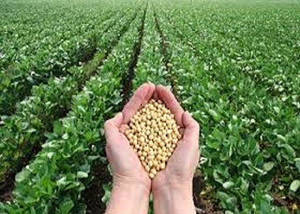 Agricultural products buying and selling business seeking Investment