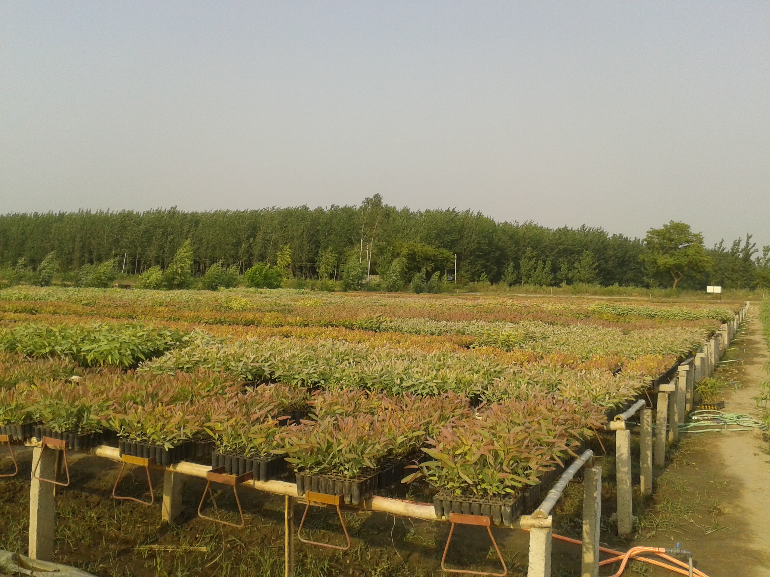 Green house Business for Sale in Uttar Pradesh