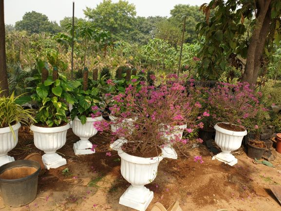 Well Established Plant Nursery for Sale in New Delhi