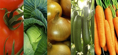 A Profitable Vegetable and Flower Seed Company for Sale
