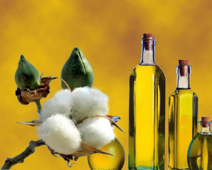 Cottonseed Oil Manufacturing Unit for Sale in Madhya Pradesh