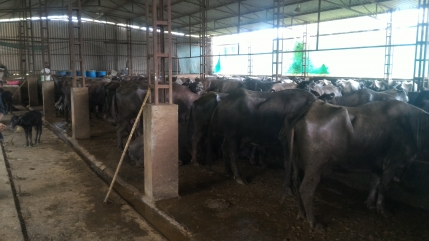 Organic Profitable Dairy Farm at Mumbai-Nashik Highway with Fssai Food License Looking for Investment