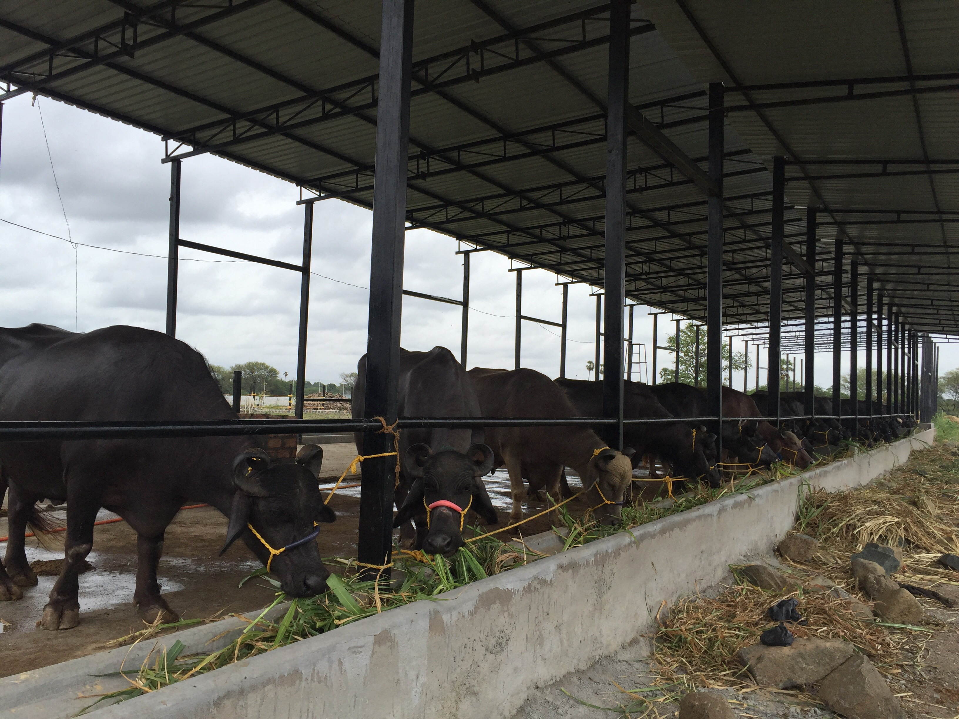 Dairy Farm for Sale in Hyderabad