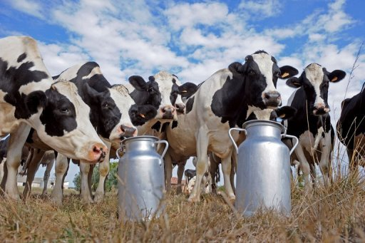 Looking for INVESTMENT Partner or JOINT VENTURE for Dairy Farm in Hyderabad.