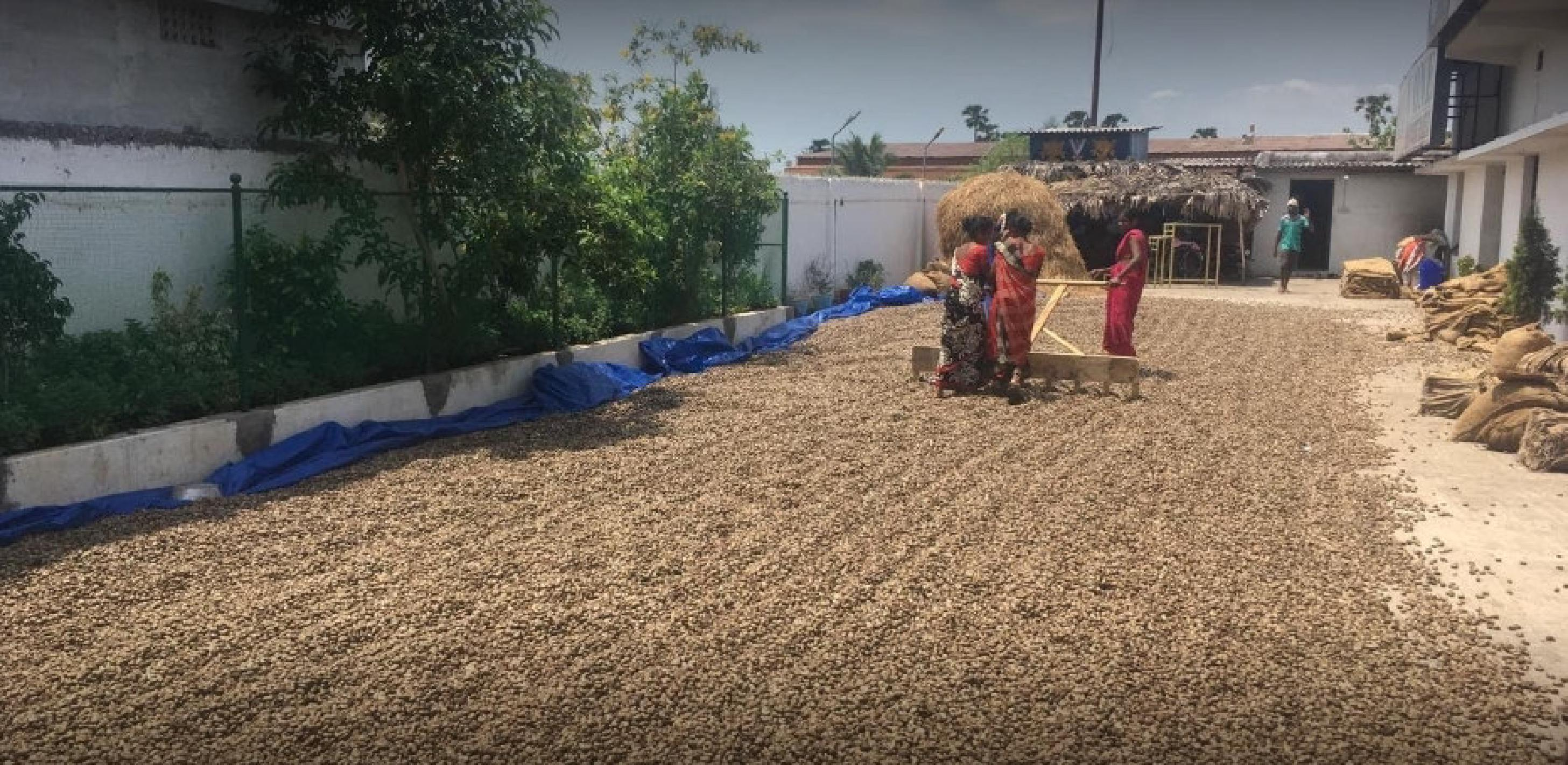 Well Established Cashew Nut Processing Unit for Sale in Visakhapatnam