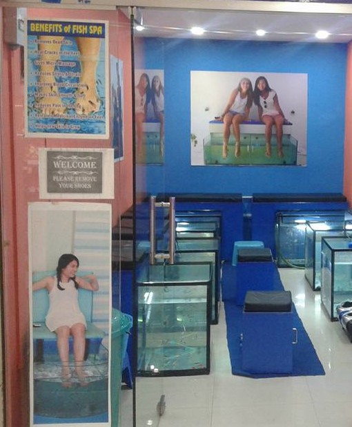 Profitable Fish Spa for Sale in Rajasthan