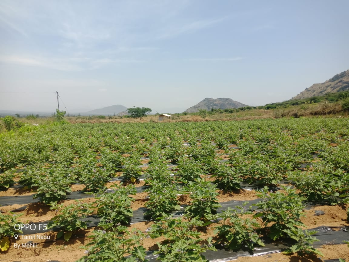 Excellent Investment Opportunity in an Integrated Operational Farm in Uthamapalayam, Tamil Nadu