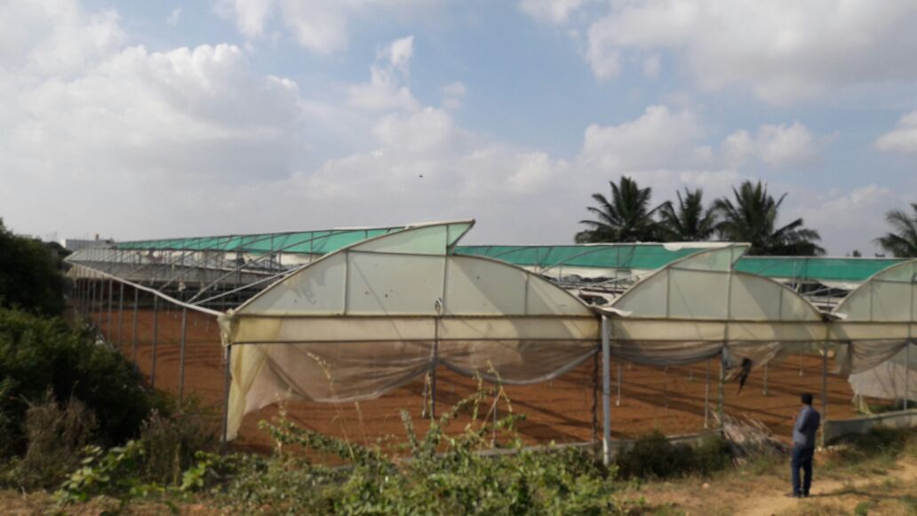Vegetable Farming Business Is Looking to Raise Funds